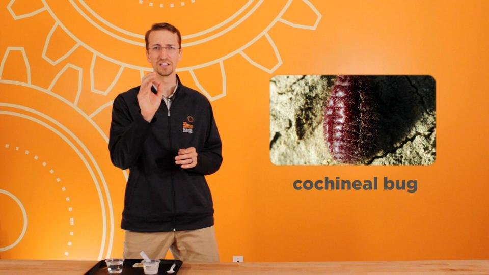 cochineal bug: Color Chemist